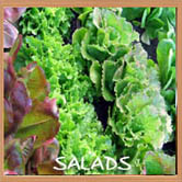 dte-buttonsalads2.jpg