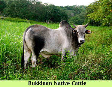 dte-nativecowpasture3.jpg